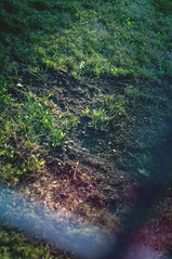 (Send me adrift.) Tags: fall grass 50mm weeds focus days flare ah 365 365days