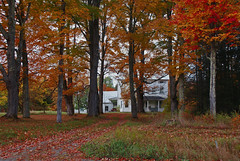 farmhouse and maples (roytsaplinjr) Tags: adirondacks autumncolors oldhomestead minervany mapletreesinfall