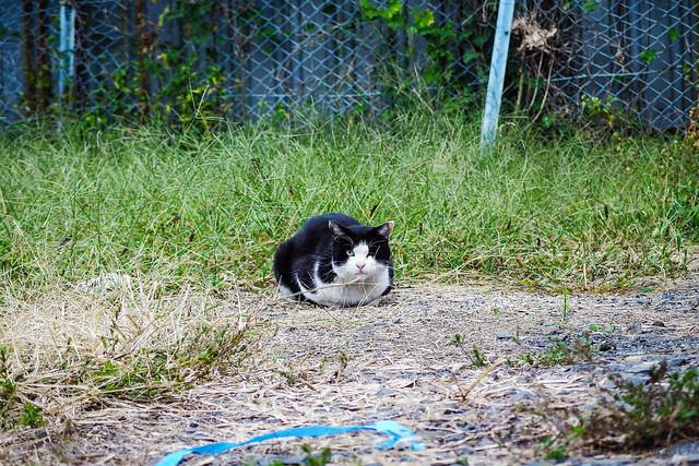 Today's Cat@2013-10-25