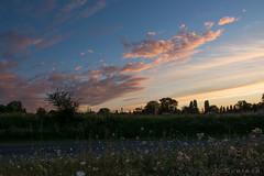 Campagne (Jean-Christophe Coutand Mheut) Tags: blue sky france de soleil nikon bleu ciel paysage campaign campagne mouton vienne calme couch 18105 coutand d5200 mheut prinay