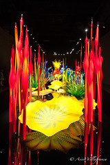 USA - Washington - Seattle - Chihuly Garden and Glass (Asier Villafranca) Tags: seattle usa color chihuly glass museum garden washington estadosunidos