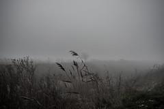 Makó 2013 (Peter Antoni) Tags: winterlandscape