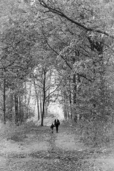 Into the light [explore 2013-11-30, thanks!] (Solomulala | mostly weekends ;-( !) Tags: autumn trees light blackandwhite bw forest walking child explored ¨mother solomulala murielcdejong