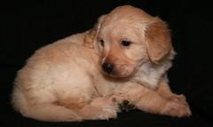 IMG_2282 (Pedro Montesinos Nieto) Tags: dog perro cachorros fragile mascotas miradas laedaddelainocencia frágiles