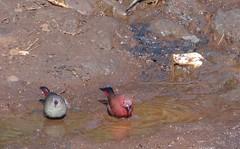 birds (GATUHA) Tags: wiseacre jimbobedsel naturebestblog alanh46 trevsbirds fourbphotography ianh3000 gabri58 bdmona
