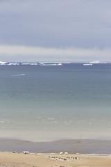 Antarctica - Day four0771 (GLRPhotography) Tags: landscape penguin antarctica 18200 adelie weddellsea seymourisland