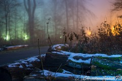 Snowy forest with fog (christian speck) Tags: trees snow fog night forest 35mm outdoors lights schweiz switzerland suisse sony lausanne arbres neige nuit foret lumieres sauvabelin rx1 brouyard