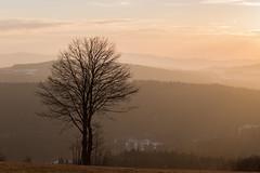 Late Afternoon (Jon Ames) Tags: tree bayerischerwald