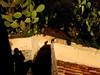 PORTICELLO (micgatti) Tags: mare gatto calabria vacanze tropea albergo porticello capovaticano ricadi