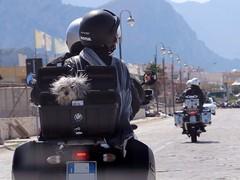 un passeggero insolito (*DoNy*) Tags: cane moto passeggero