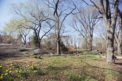 Central Park in Spring (megan-breukelman) Tags: nyc newyorkcity summer sunlight ny newyork sunshine spring bokeh centralpark manhattan