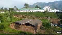India - Kerala - Munnar - Tea Factory - 110 (asienman) Tags: india mountains kerala hills teafactory teaplantation munnar teapicker asienmanphotography teaplantagens