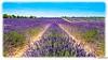 AL-Lavande-Valensole-20150626-035.jpg (Shoot Enraw) Tags: provence 26juin lavandes valensole 18200mmf3556