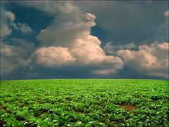 Contact line (Katarina 2353) Tags: field landscape spring serbia srbija serbian deliblatskapescara serbiainspired