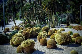 Jardín de Cactus, Costa y Llobera Barcelona