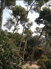 Park (charly_94) Tags: windig bäume schief park natur spanien urlaub erholung