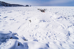 Walking on Driftice 01 (tomomega) Tags: 知床 流氷 北海道 雪 氷 ice snow driftice
