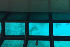 55. My flip-flop (Misty Garrick) Tags: johnpennekamp johnpennekampreef johnpennekampcoralreefstatepark coralreef florida keylargofl keylargo floridakeys atlanticocean