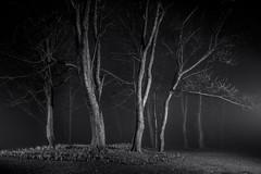 Life.jpg (___INFINITY___) Tags: night eos monochrome aberdeen tree strobist dazza1040 bw infinity canon 6d darrenwright light