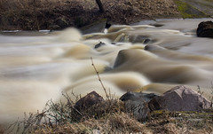 """The """"Soft"""" River (modestmoze) Tags: rapid swift lithuania outside outdoors out 2017 500px travel explore river water dirty brown white black green grass yellow flowing running rocks nature naturephotograph fast day 10stopfilter filter longexposure interesting view spring march"""