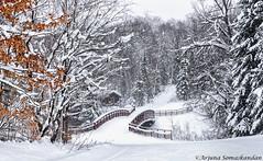 Arrowhead Provincial Park - winter wonderland -1 (digithief) Tags: arrowheadprovincialpark d810 huntsville nikon oxtonguewaterfalls winter snow ontario canada ca