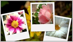 collage11 (stuffstuffstuffstuff) Tags: pink flowers white nature colors yellow collage purple natur blumen lila gelb farben weis