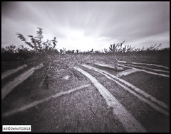 A wet day in Ailsa Craig's Field (DelioTO) Tags: wood ontario canada rural landscape blackwhite may pinhole 4x5 f200 adox25chs autaut ro9