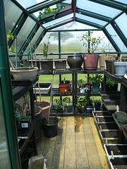 Inner Sanctum (jazzijava) Tags: summer food plants green nature garden outside living spring natural gardening outdoor tomatoes may strawberries greenhouse alive growing organic growingfromseed growingfood growyourown growingplants garden2013 gardening2013