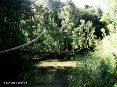 FACTORY CREEK, COBOURG, ONTARIO (bitemeasshole69) Tags: trees ontario canada nature water creek forest outdoors spring fishing scenery stream warm wildlife scenic salmon peaceful foliage evergreen ravine serene trout dogpark ymca habitat tranquil 2000s cobourg floodplains cedartrees babblingbrook factorycreek unofficialunleashzone