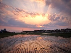 Rice Paddy Sunset in Chiba (lestaylorphoto) Tags: camera travel sunset field japan countryside rice paddy araki chiba leslie taylor  gaijin  iphone       snapseed lestaylorphoto