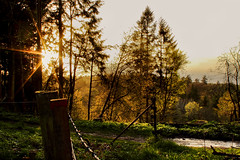 Fences (craigie71) Tags: trees sunset sun forest canon fence woodland clyde newlanark lanark clydevalley 600d