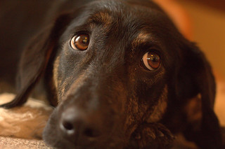 Daily Dog 2013 151: Sweet Look