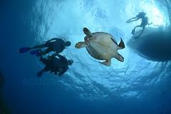 2013 04 METTRA OCEAN INDIEN 1826
