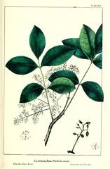 Anglų lietuvių žodynas. Žodis zanthoxylum flavum reiškia <li>zanthoxylum flavum</li> lietuviškai.