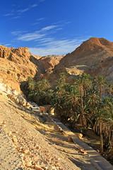 IMG_6179_2 (Chan HC) Tags: tunisia north oasis tozeur chebika chottelgharsa tozeuron