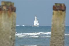 zeemeeuw (Omroep Zeeland) Tags: zeeland weer zeeuws blije zeemeeuwen omroepzeeland
