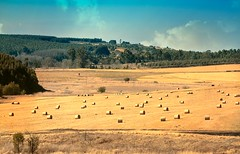 Midlands Natal farmlands (WITHIN the FRAME Photography(5 Million views tha) Tags: skyline landscape southafrica farming midlands kwazulunatal harvested eos7d