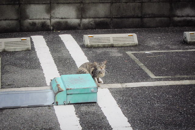 Today's Cat@2013-08-03