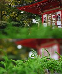 Temple VIew (celinedejong) Tags: red plant blur green contrast garden temple japanese focus tea sharp