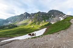 Schwarzsee / Ref.04103 (FRIBOURG REGION) Tags: panorama clouds landscape schweiz switzerland suisse wolke nuages paysage landschaft schwarzsee lacnoir kaiseregg fribourgregion