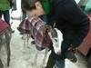 HornPond01-30-2011032