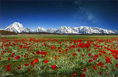 Bleu Blanc Rouge (Jean-Michel Priaux) Tags: red flower nature photoshop landscape spring poppies unreal paysage fild irrel priaux mygearandme