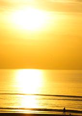Nog een klein stukje zomer.. (sonja146) Tags: man water strand zonsondergang zee hond zon zandvoort hondje zonlicht goud golven zandvoortaanzee