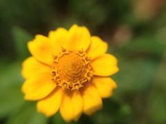 (luisinho.allmeida) Tags: hipbotunsquare uploaded:by=flickrmobile flickriosapp:filter=nofilter