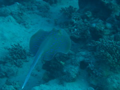 11  2013 (6) (acmt2001) Tags: sea fish coral underwater  redsea scuba diving reef eilat