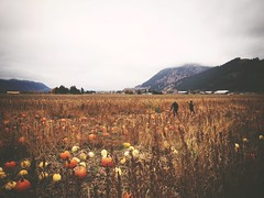 Visit to Pete's Corn Farm (cjazzlee) Tags: autumn chase kamloops chasebc uploaded:by=flickrmobile brooklynfilter flickriosapp:filter=brooklyn