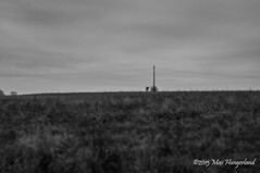 (Jesterhead_Germany) Tags: bw white black fall field nikon herbst feld sigma 1770 schwarz d300 weis mncheberg thephotographyblog