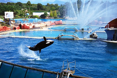 IMGP1096 (rum_den_1986) Tags: dolphin orca dauphin antibes marineland orque