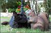 Vanina (Didier Ensarguex) Tags: chat vanina chatvanina