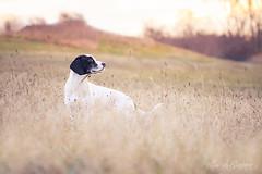 sanft (S. Elschner) Tags: sunset dog action hund gegenlicht morgens
